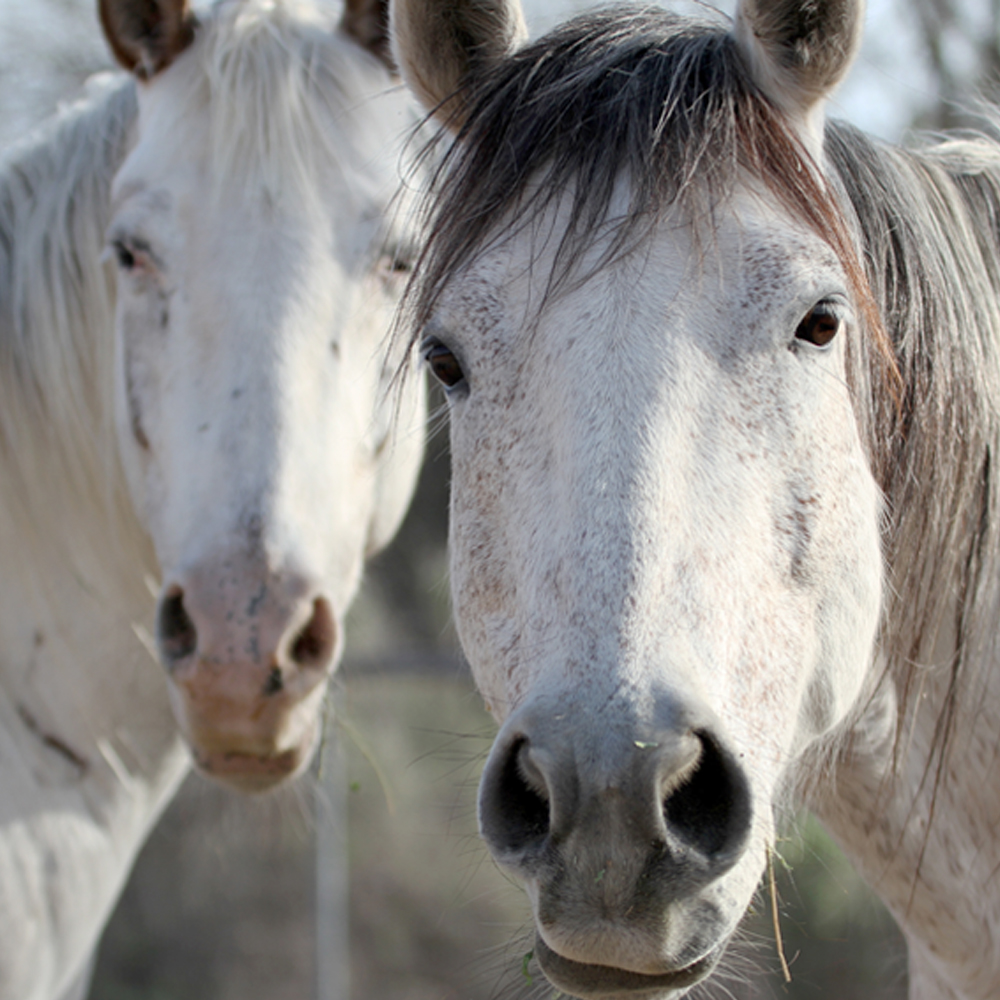 Tripple R horse rescue photography
